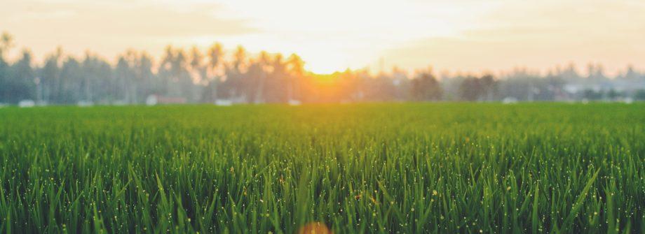 grass field lawn photo by Photo by Fauzan Saari