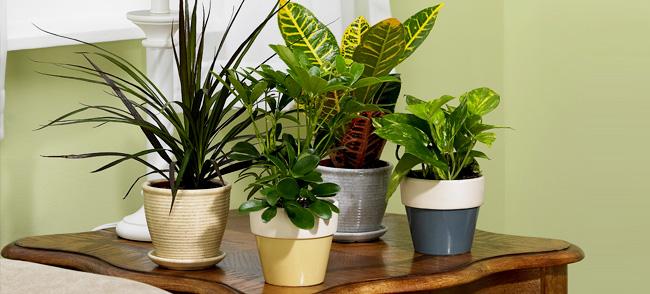 houseplants-for-beginners