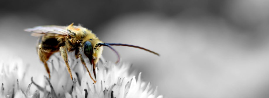 bee photo by Luke Schobert on Unsplash